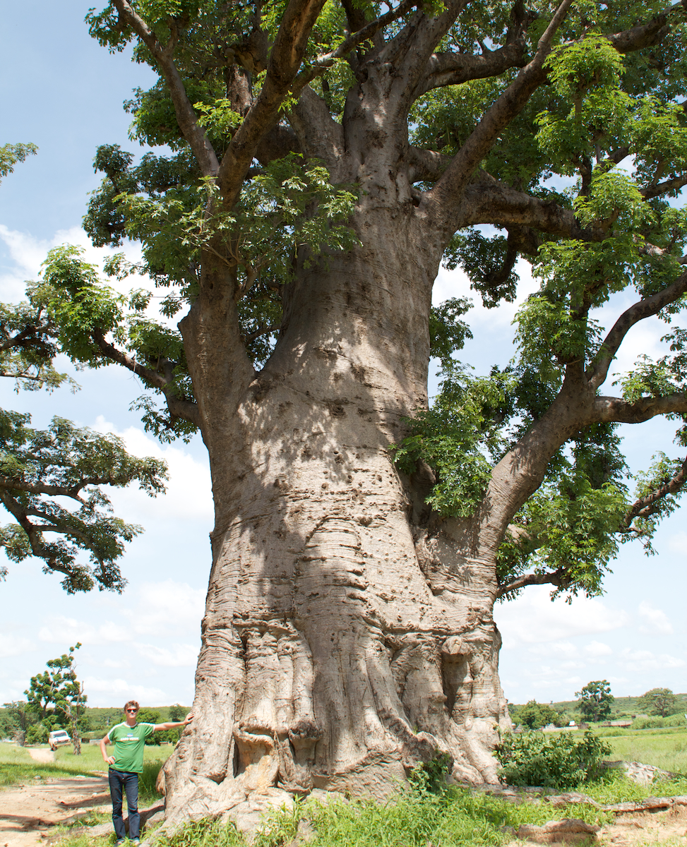 contes et l gendes du baobab baobab. Black Bedroom Furniture Sets. Home Design Ideas