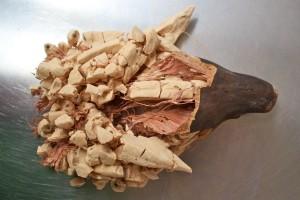 Le fruit du baobab bio ouvert laissant apparaître la pulpe et les fibres rouges
