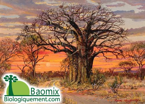 Conte, le baobab généreux