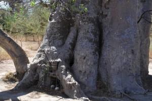Un baobab pour tombeau